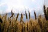 Rebríček lacných rastlinných (vegánskych) proteínov